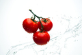 Red tomatoes on a branch with drops of water on a white background - PhotoDune Item for Sale