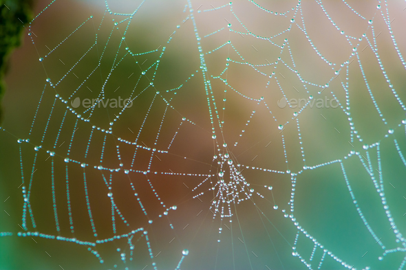 Closeup of a wet spiderweb wtih dew drops - Stock Photo - Images