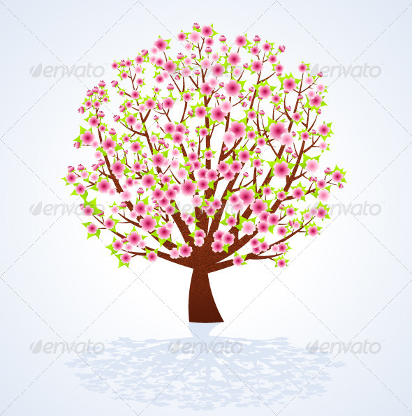 Cherry Blossom Tree - Seasons Nature
