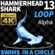 Hammerhead Shark 13 Swims in a Circle-3 - VideoHive Item for Sale