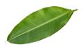 Fresh whole banana leaf
