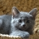 Cute Kitten Resting in the Room - VideoHive Item for Sale