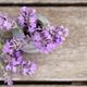 Fragrant Lavender  - PhotoDune Item for Sale