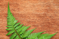 Fern on the wooden board - PhotoDune Item for Sale