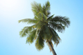 Coconut tree with blue sky - PhotoDune Item for Sale