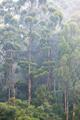 Mist Shrouded Forest - PhotoDune Item for Sale