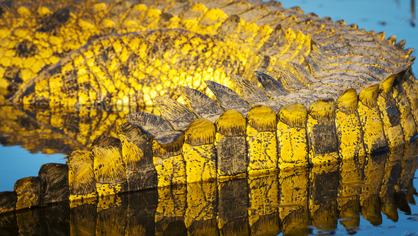 Alligator Scales Detail