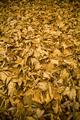 Autumn Leaf Background - PhotoDune Item for Sale