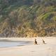 Kangaroos On Beach At Dawn - PhotoDune Item for Sale
