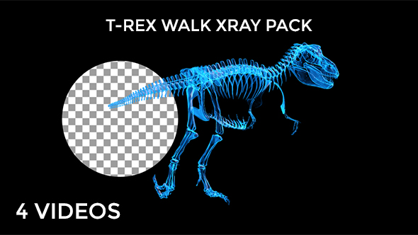 Tyrannosaur Skeleton Walking Xray Background with Alpha