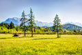 Meadow in the alps of Bavaria - PhotoDune Item for Sale