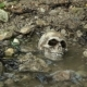 Skull on the Seashore Washed By Waves
