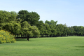 Park with Green Grass and Trees - PhotoDune Item for Sale