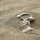 Human Skull Brushed From the Sand