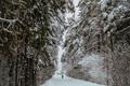 Winter Alley in Park