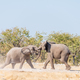 Two young African elephant bulls in a mock fight - PhotoDune Item for Sale