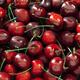 cherry background - PhotoDune Item for Sale