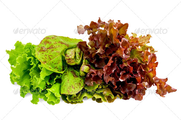 Lettuce green spotted and red - Stock Photo - Images