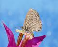 Butterfly On Bougainvillea Flower