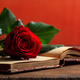 Red rose on a vintage book on dark background - PhotoDune Item for Sale