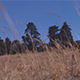 Grass with Tree Backdrop - VideoHive Item for Sale