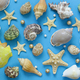 Shells and Starfish  - PhotoDune Item for Sale