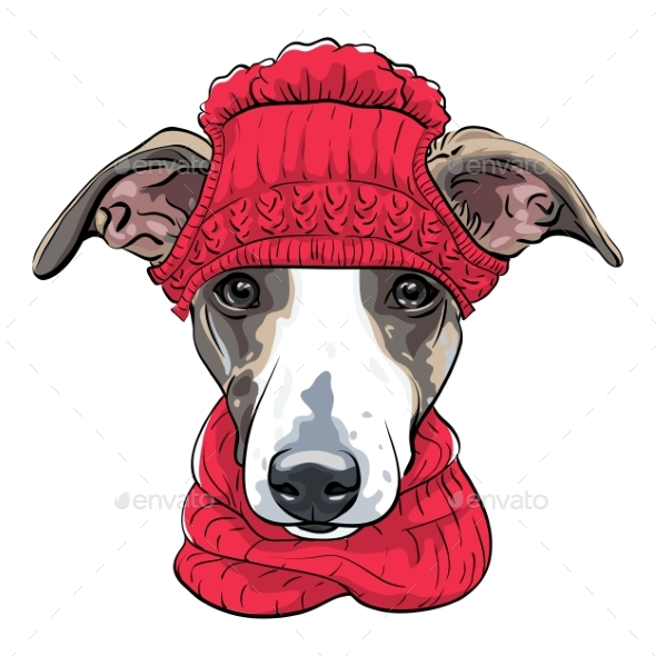 Vector Italian Greyhound Dog Breed - Animals Characters