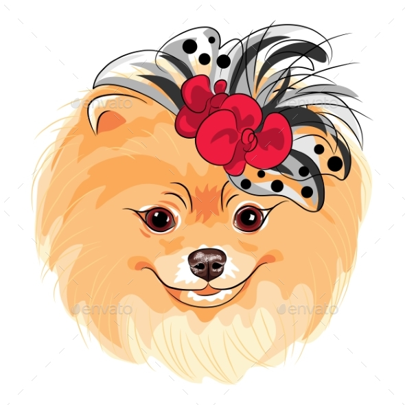 Vector Fashion Dog Pomeranian Breed Smiling - Animals Characters