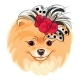 Vector Fashion Dog Pomeranian Breed Smiling