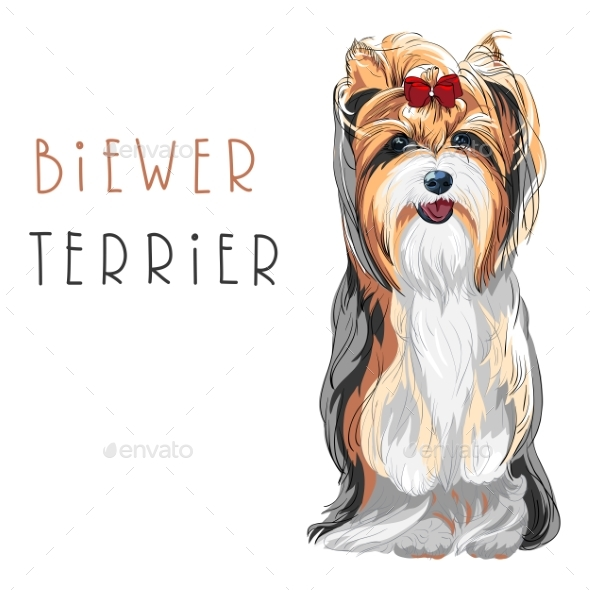 GraphicRiver Vector Funny Biewer Yorkshire Terrier Dog Sitting 20396374
