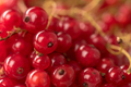 Red currant berries close up. Macro.