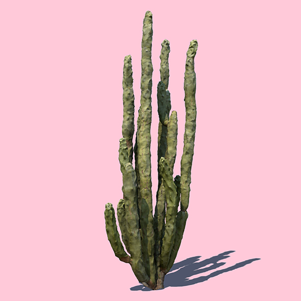 Totem Cactus - 3DOcean Item for Sale