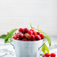 fresh cherry - PhotoDune Item for Sale