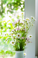 Field flowers of chemist's daisy near the window - PhotoDune Item for Sale