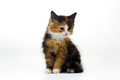 Furry kitten on white background isolated - PhotoDune Item for Sale