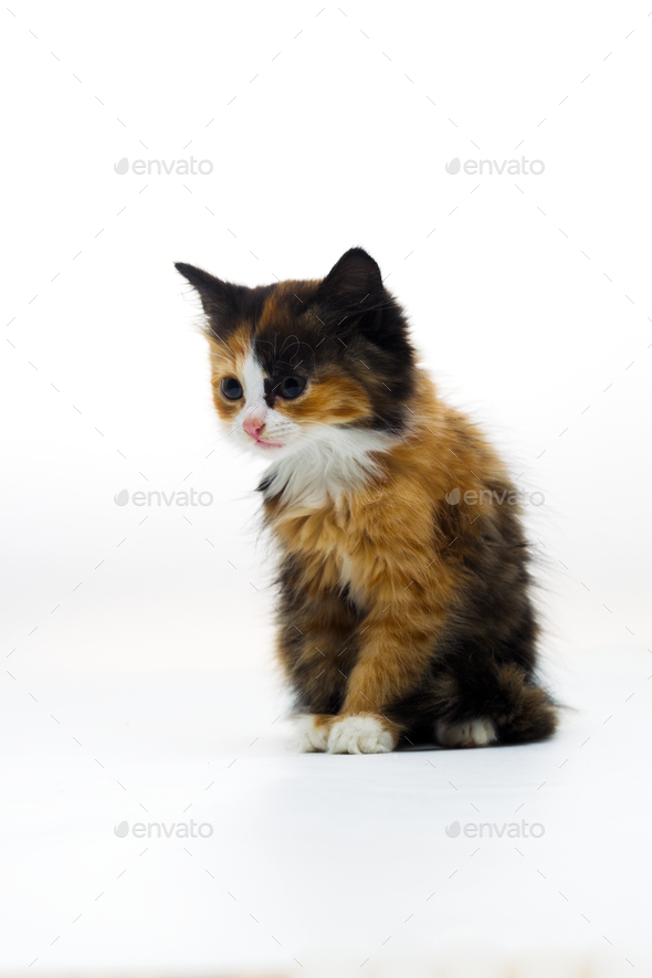 Furry kitten on white background isolated - Stock Photo - Images