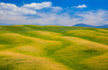 Rolling hills, green fields in Tuscany, Italy - PhotoDune Item for Sale