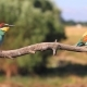 Exotic Birds on a Summer Day - VideoHive Item for Sale