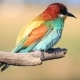 Bird with Incredible Feathers - VideoHive Item for Sale