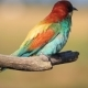 Incredibly Beautiful Bird Sitting on a Branch - VideoHive Item for Sale