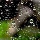 Drops of Rain on a Window Glass on a Green Background - VideoHive Item for Sale