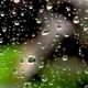 Drops of Rain on a Windowpane on a Background of Nature - VideoHive Item for Sale