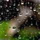 Drops of Rain on the Glass on the Background of Nature - VideoHive Item for Sale