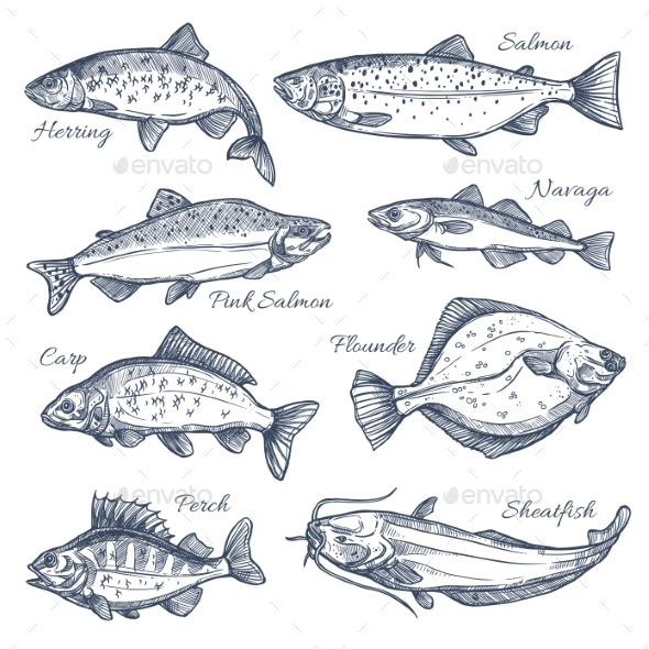 Sea Fish Sketch Vector Isolated Icons - Animals Characters
