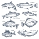 Sea Fish Sketch Vector Isolated Icons