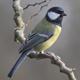 Bird Song 2