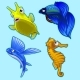 Flying Fish, Seahorse and Other Tropical Fish