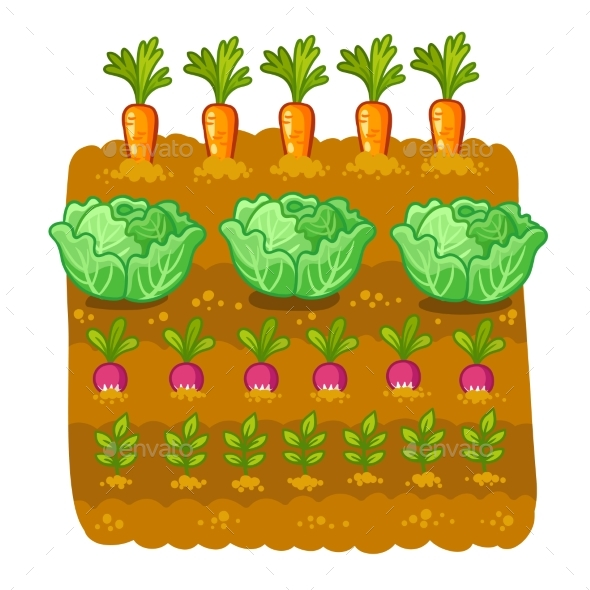 Vector Illustration with Cabbage and Radish - Food Objects