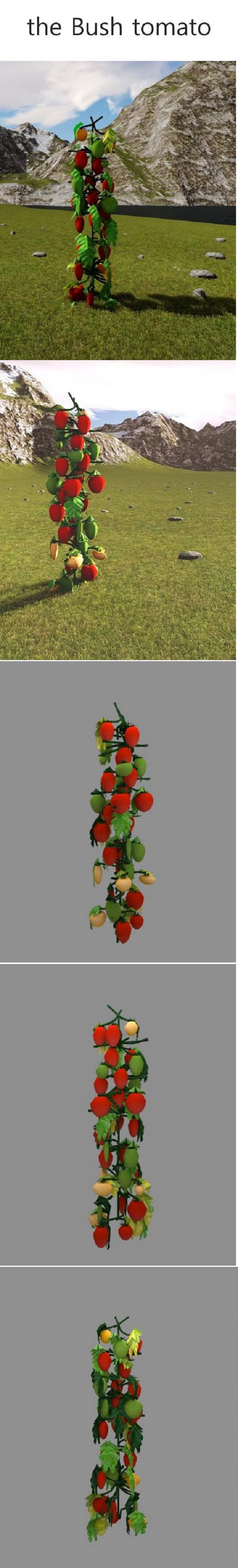 the bush tomato - 3DOcean Item for Sale