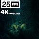 Jungle Palms 02 4K